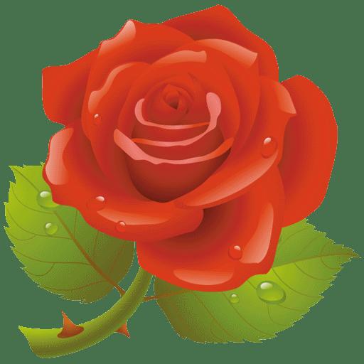 Rózsa Info