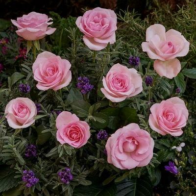 Rózsa és levendula