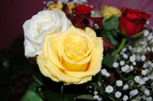 Rózsa színek kategória