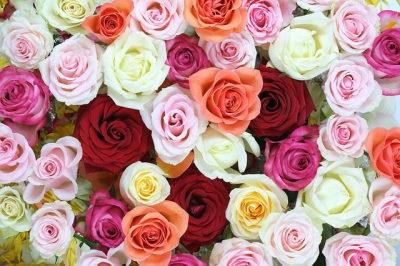 Rózsa webáruház