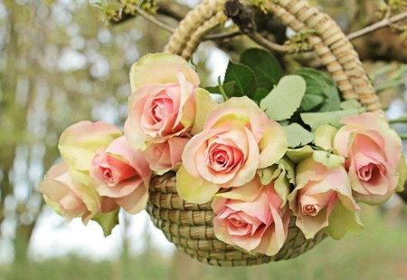 Teahibrid rózsa fajták