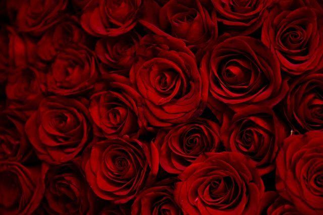 Vörös rózsa 100 szál